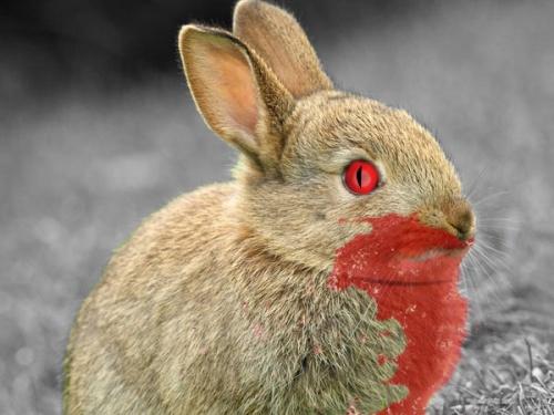 killer_bunny